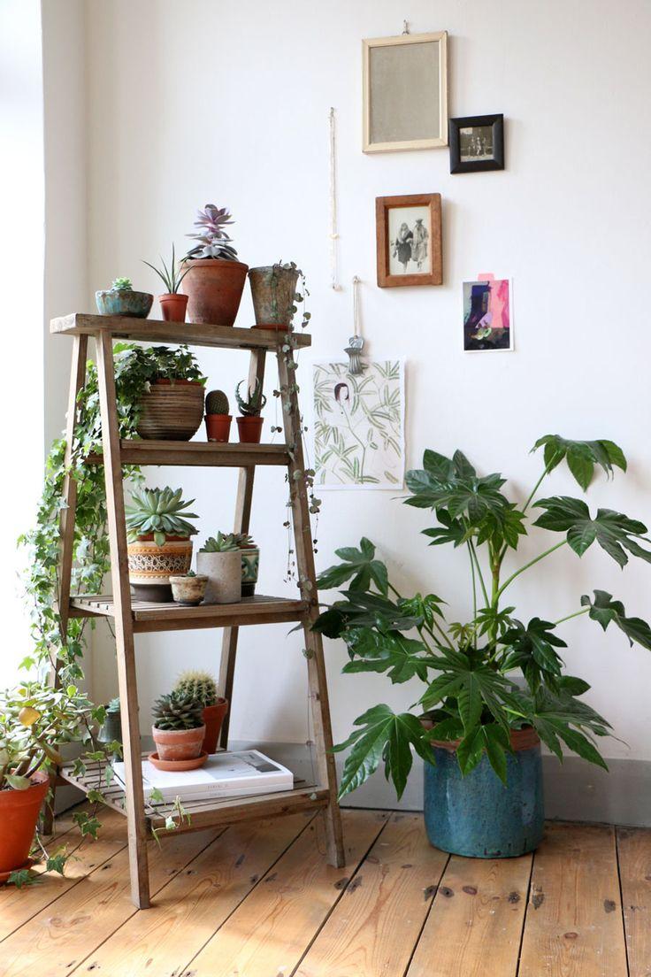 Merdevine za biljke